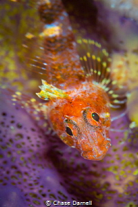 """""""Orange Crush"""" I loved the colors that this Triple Fin h... by Chase Darnell"""