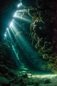 Jackfish Alley Light  Nikon D800 Natural Light  Nauticam by Spencer Burrows