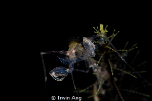D I N N E R 