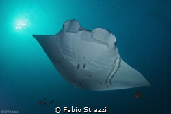 Manta in Nusa Penida by Fabio Strazzi