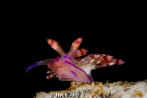 F L Y I N G 
