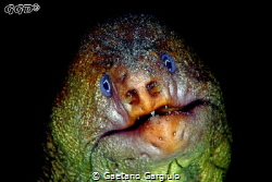 """The Hulk"" this large moray eel is also known as ""old man... by Gaetano Gargiulo"