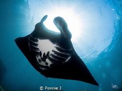 Bat of the sea by Ponnie J
