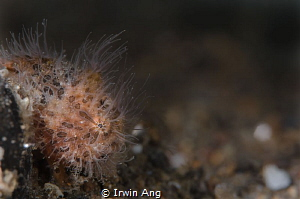 H A I R Y