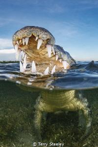 Happy snapping — Subal underwater housing, Zen DP230, Ca... by Terry Steeley