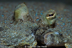 Flounder Close-up by Goos Van Der Heide