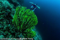 Diver in action, taken at Sipadan Island, Malaysia. Sony ... by Chris Hong