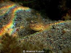Goby under natural prisma light by Aksems Kuzucu