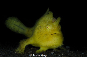 Y E L L O W
