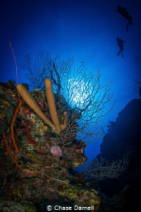 """""""Floating"""" Divers passing a sun lit gorgonian. by Chase Darnell"""