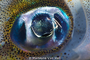 I C U by Marteyne Van Well