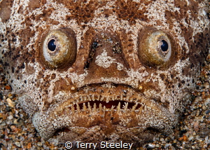 Face in the sand — Subal underwater housing, Canon 5D mk... by Terry Steeley