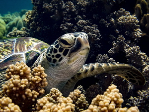Hang 10  Loved encountering this turtle - I was on my w... by Robin Bateman