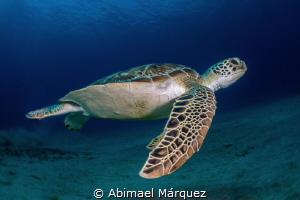 Green Turtle by Abimael Márquez
