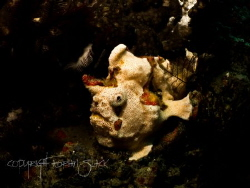 Blended. White with orange dots painted frogfish by Adrian Slack