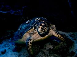 This turtle decided he was friendly and posed for this sh... by Steven Anderson
