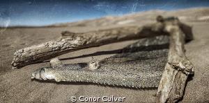 """Flounder Desert"" part of my Underwater Surrealism series... by Conor Culver"