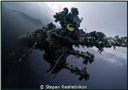 DRAGON. Red Sea. Egypt. Hurgada. Wreck Giannis-D by Stepan Reshetnikov