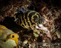 Chain Moray in East End by Lowrey Holthaus
