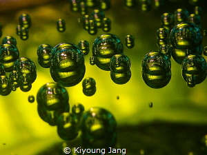 shot of bubbles and seasquirt taken by Olympus tg-3. insi... by Kiyoung Jang