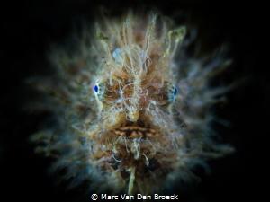 hairy facetime by Marc Van Den Broeck