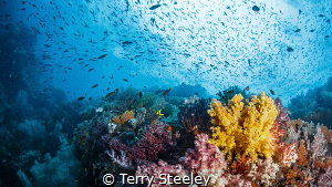 We dream in colors borrowed from the sea — Subal underwa... by Terry Steeley