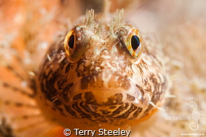 Making eye contact