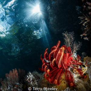 Sunbeams — Subal underwater housing, Canon 1Dx, Canon 8-... by Terry Steeley