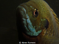 Modeling babe/Shy fish trying to model for me by Abner Romero