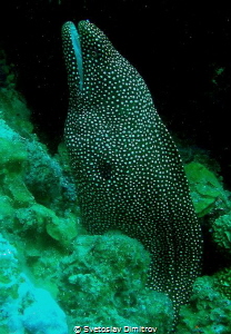 My favourite moray ell by Svetoslav Dimitrov