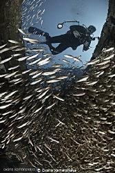 Fish School by Oxana Kamenskaya