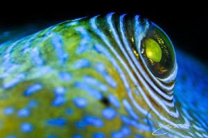 ~ Old Blue Eyes ~ by Geo Cloete