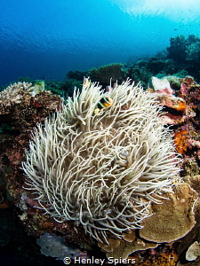 Gloriously healthy coral reef off Cabilao island. by Henley Spiers