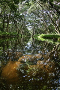 Shallow Stream on the island of Kauai by Tony Cherbas