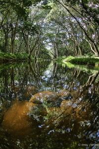 Shallow Stream on the island of Kauai by Tony Cherbas
