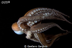Stuck on my dome (1) ... the octopus after the attack to ... by Gaetano Gargiulo