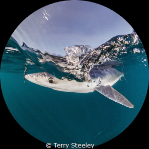 Through the round window... — Subal underwater housing, ... by Terry Steeley