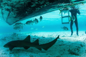 Shark and Jacks under the Boat, San Pedro Belize by Alejandro Topete