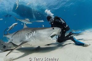 A slow day at the office.  — Subal underwater housing, C... by Terry Steeley