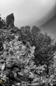 ikelite, Niikon D90, tokina 10-17 Fisheye by Arun Madisetti