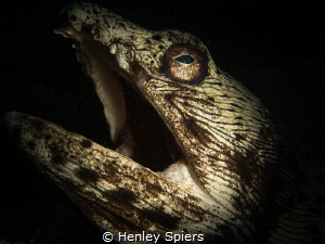 Halloween Spotted Snake Eel by Henley Spiers