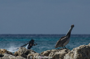 A pelican is oblivious to what's happening in the backgro... by Adeline Wee