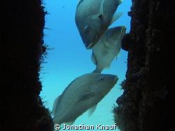 C56 Shipwreck Grunts by Jonathan Knauf