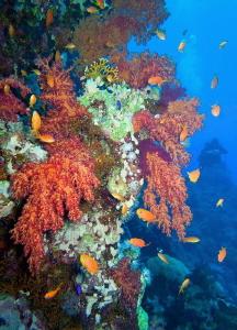 Coral reef. by Sergey Lisitsyn