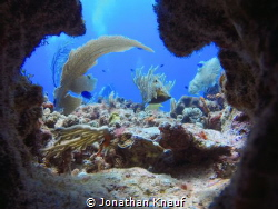 Aquario Cave by Jonathan Knauf