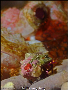 Hermitcrab & Scorpionfish by Kiyoung Jang