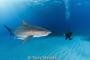 The ocean has a wonderful way of showing us what really m... by Terry Steeley