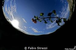 Sun and flower by Fabio Strazzi