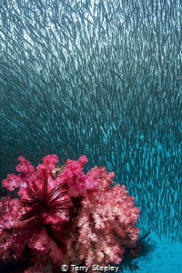 Rush Hour — Subal underwater housing, Canon 1Dx, Canon 8... by Terry Steeley