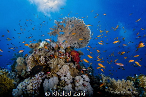 Coral Reef Shark Bay taken by Canon 5D mk3 8-15 fish eye ... by Khaled Zaki